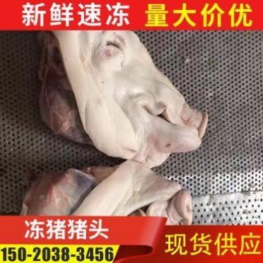 山东冷冻猪头肉批发 冷冻分割带耳猪头肉 生猪头肉厂家现货